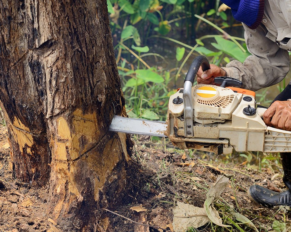 Tree Service East Lansing - Tree Removal