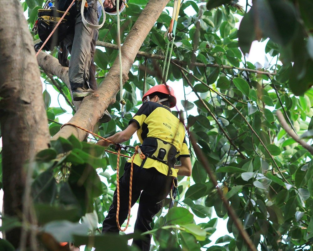 Tree Service East Lansing - Emergency Tree Removal